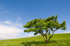 Tree and wind royalty free stock photo
