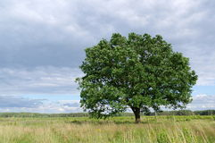 Tree in the wind. Stock Photo