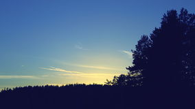 Tree wind at sunset, clouds float. Tree move in the wind at sunset, clouds float stock footage