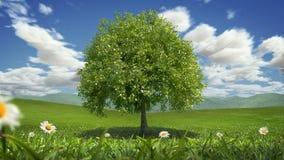 Tree Wind, Timelapse, Seamless Loop stock video
