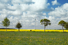 Tree and wind turbine Royalty Free Stock Images