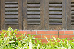 Tree window brick wall Stock Photo