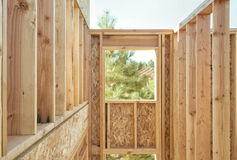 Tree Through Window In Construction Site Stock Photography