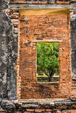 Tree in a window Frame - Ayutthaya, Thailand. Stonewall double frame with a tree Stock Image