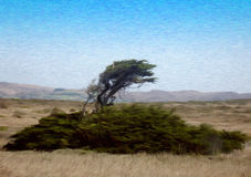 Tree on a Windy Coast. Painting of a Tree on a Windy Coast in oil technique made on a computer Stock Images
