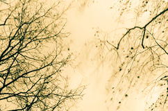 Tree on windy weather Stock Photography