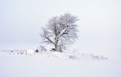 A tree in winter Stock Photo