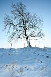 Tree in winter Stock Images