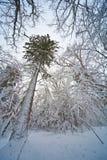 Tree in winter. Stock Photo