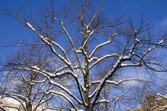 Tree in Winter stock photography