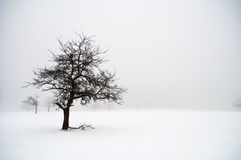 Tree in Winter Royalty Free Stock Images