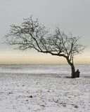 Tree in Winter Stock Photos