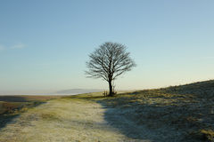 Tree in winter. Photograph of a tree in winter with frost on the ground Royalty Free Stock Images