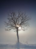 Tree in winter. Time at the rising sun Royalty Free Stock Photography