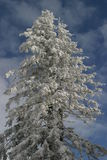 tree winter στοκ φωτογραφίες