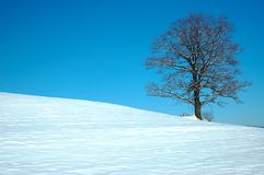 Tree in winter. A lone tree in winter Royalty Free Stock Photos