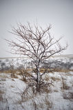 Tree in winter. Royalty Free Stock Photography