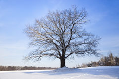 Tree in the winter Stock Photos