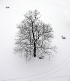 Tree in WInter. Overhead view of picnic tables and snow covered tree stock photography
