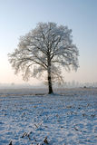 Tree in the winter Stock Photos