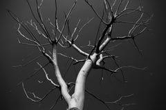 Tree in winter Stock Photo