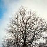 Tree in winter Stock Photos