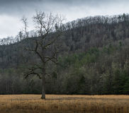 Tree, Winter in Cataloochee Valley, Great Smoky Mountains Nation Royalty Free Stock Images