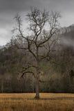 Tree, Winter in Cataloochee Valley, Great Smoky Mountains Nation Stock Photos