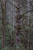 Tree, Winter in Cataloochee Valley, Great Smoky Mountains Nation Royalty Free Stock Photos