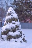 Tree cover with winter snow. Tree in winter cover with some snow with some fences Royalty Free Stock Photos