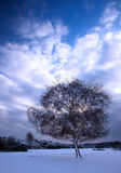 Tree on winter day Stock Images