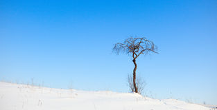 Tree on winter field Royalty Free Stock Images