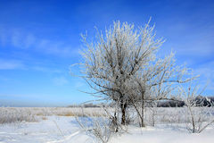 Tree on the winter field Royalty Free Stock Image
