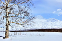 Tree on winter field and blue sky Stock Photography