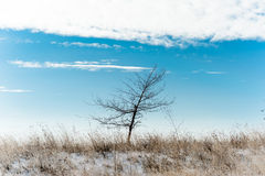 Tree in a winter field Royalty Free Stock Images