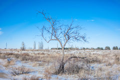 Tree in a winter field Stock Photo