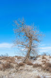 Tree in a winter field Stock Images