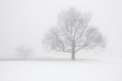 Tree in Winter Fog Royalty Free Stock Image