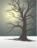 Tree In Winter Fog 2. Silhouette of an old tree in the winter and dull fog Stock Photos