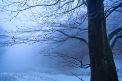 Tree in winter foggy morning Stock Photography