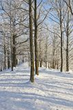 Tree in winter forest Stock Photos