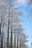 Tree in winter forest Stock Image
