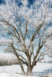 Tree in winter forest, blue sky and white snow, beautiful wild landscape Royalty Free Stock Photography