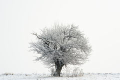 Tree on winter horizon Royalty Free Stock Images