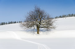 Tree in winter landscape Stock Images