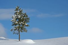 Tree in winter landscape Royalty Free Stock Photography