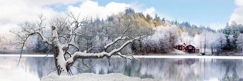 Tree in winter landscape Stock Photography