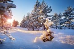 Tree in winter landscape Stock Image