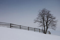 An tree in a winter landscape with a nice. Vintage fence in Romanian mountains royalty free stock images