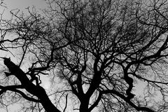 Tree in Winter. Low Angle View of a Silhouetted Bare Wintry Tree in Black and White Royalty Free Stock Images